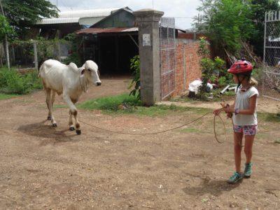 De Kampong Cham à Kratie à travers les plantations d'hévéas