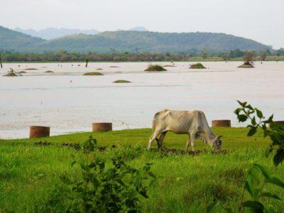 Kampot et son fameux poivre : visite de La Plantation