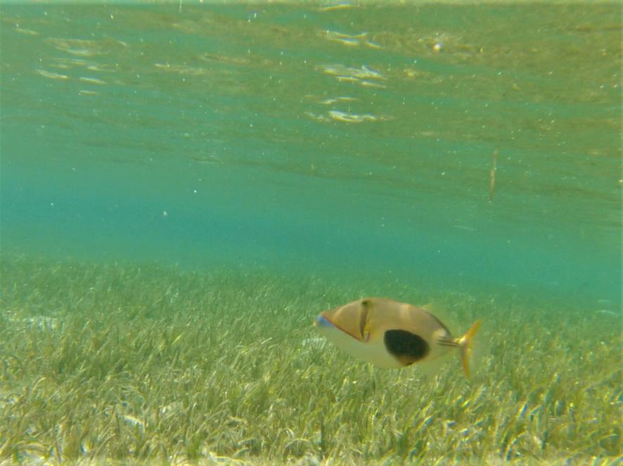snorkeling à bolilanga, Togian