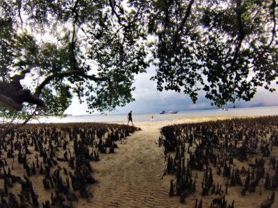 Bunaken : snorkeling devant Lorenso Cottages et visites des guest-houses alentours