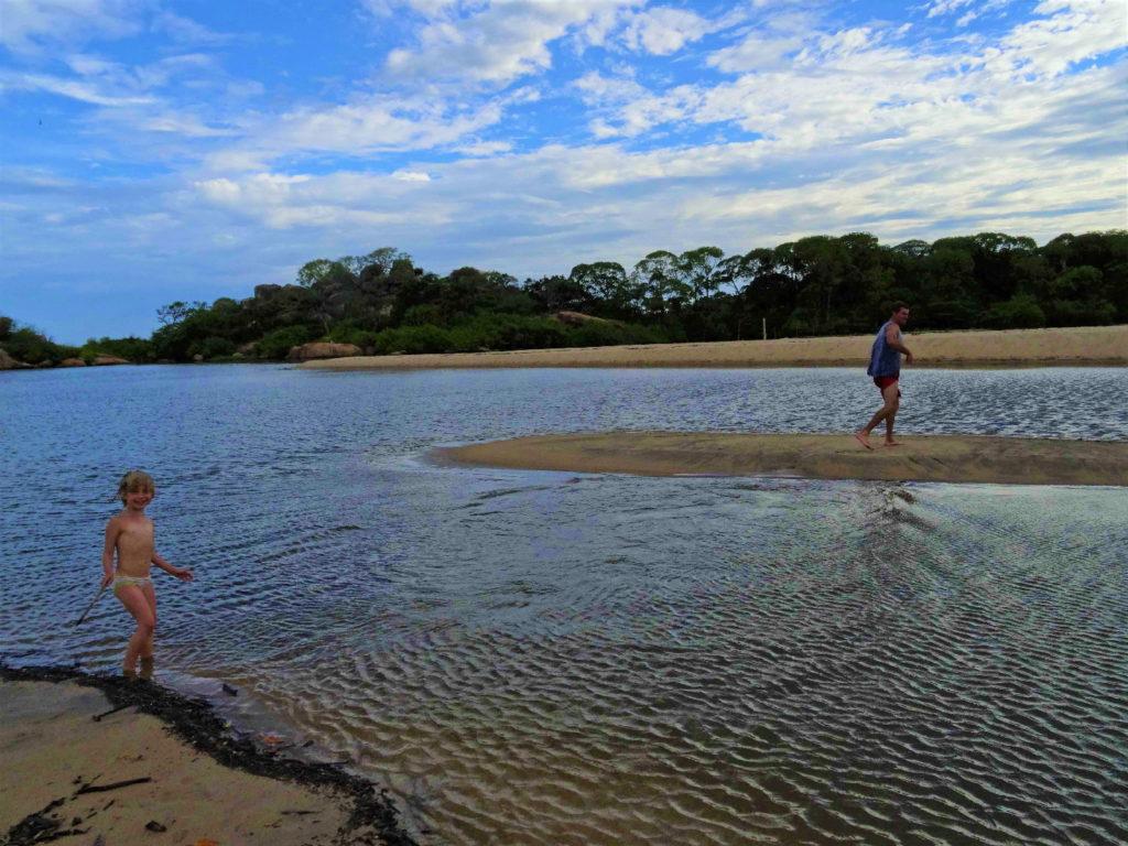 chaton a traversé la lagune d'elephant rock pour rejoindre les bancs de sable, près d'arugam bay