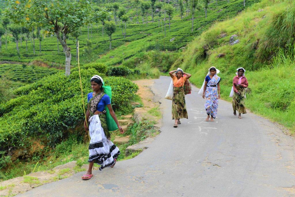 femmes transportant des denrées entre haputale et lipton's seat
