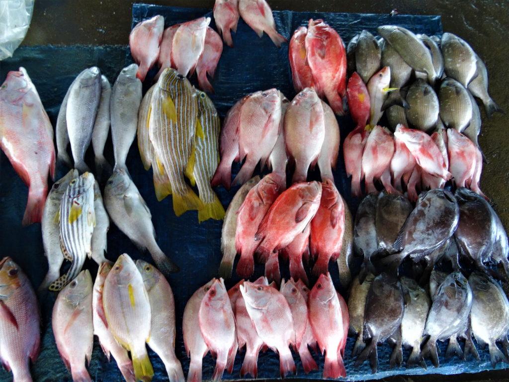 étalage de poisson à Paotere le vieux port de Makassar
