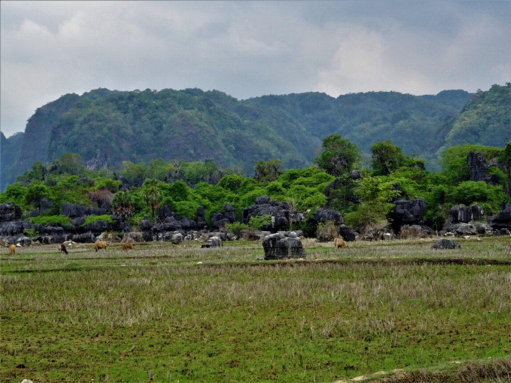 rizières, falaises karstiques entre makassar et ramang-ramang