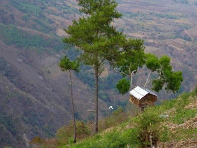 Les cabanes perchées dans les arbres, au dessus de Palu