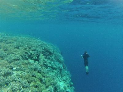 Plongée sous-marine à Bunaken