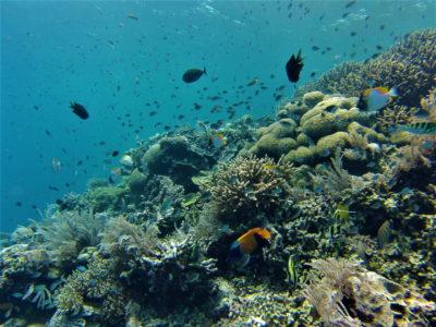 Snorkeling à Bunaken, encore!