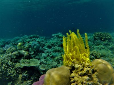 Snorkeling sur le reef n°1 depuis Malenge, Togian