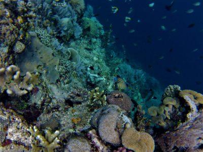 Snorkeling au large de Kadidiri et Taipi, îles Togian