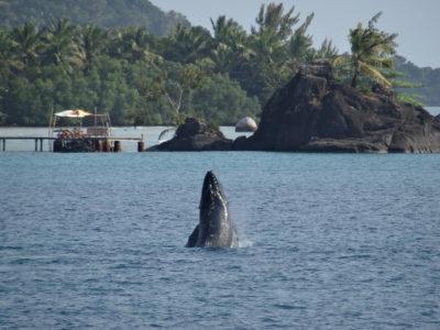 De Mahambo à l'île Sainte-Marie avec un défilé de baleines