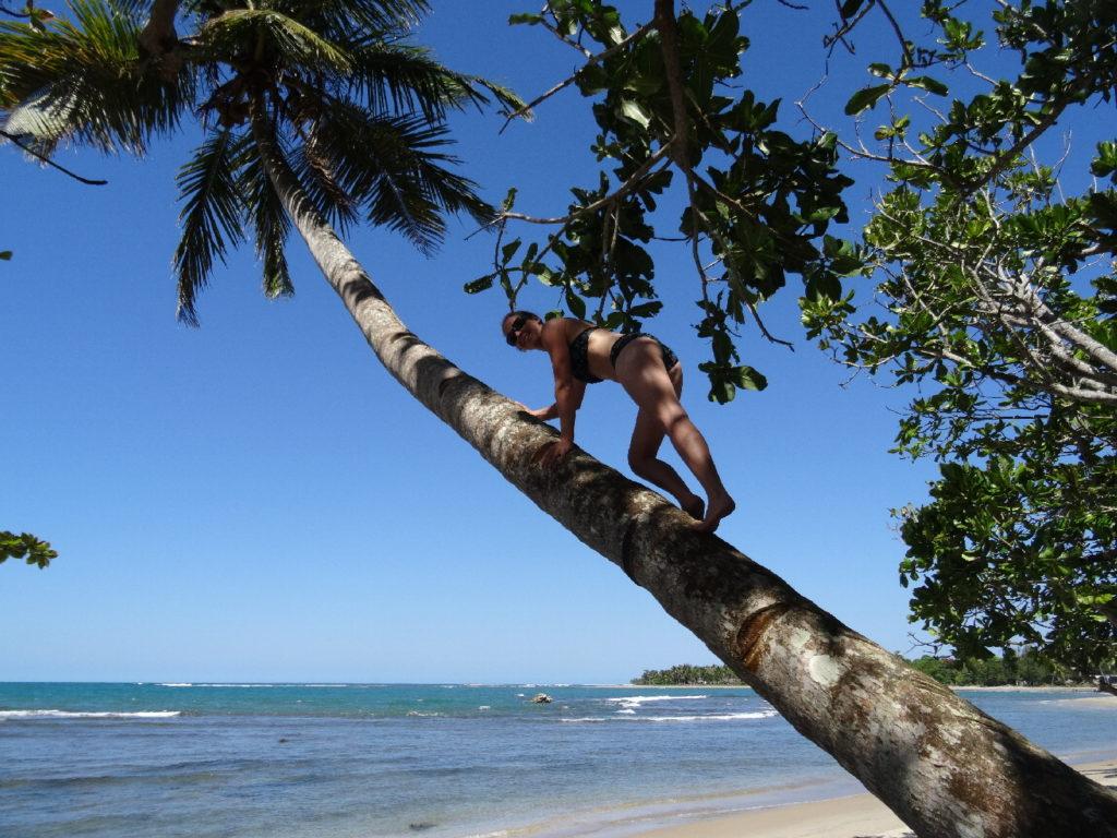 chatoune dans cocotier à mahambo
