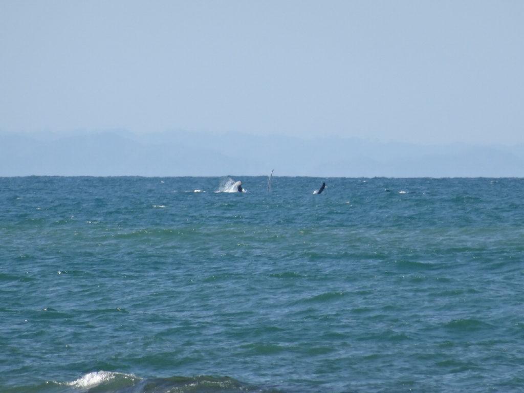 baleine à mahambo