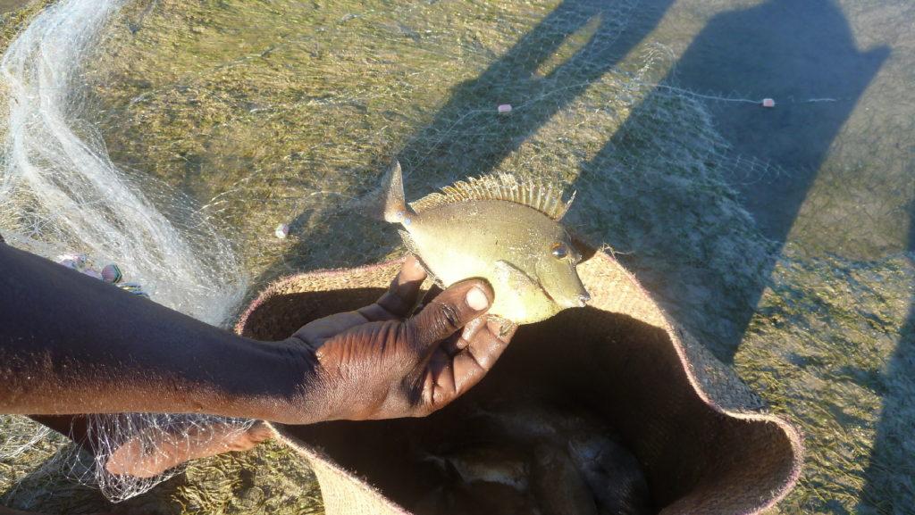 poisson pêché à mahambo
