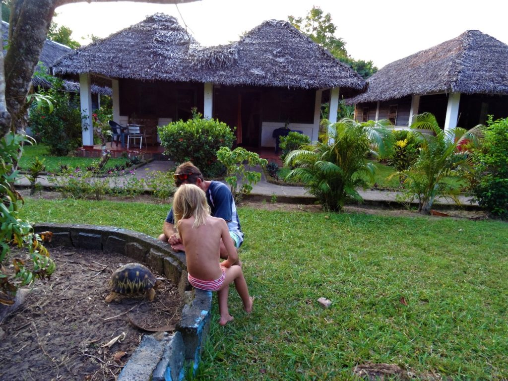 tortue à mahambo à l'hotel ylang ylang