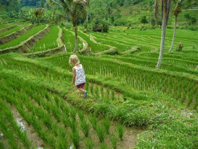 D'Ubud à Bedugul via les rizières de Jatiluwi