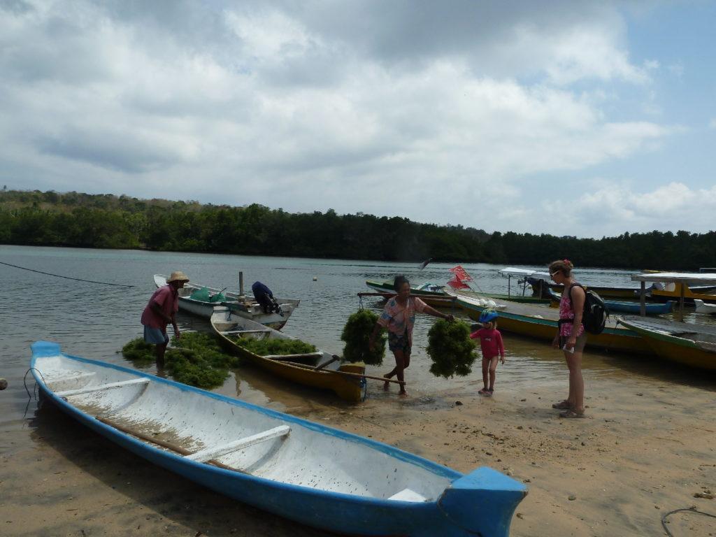 culture d'algue, nusa ceningan et lembongan