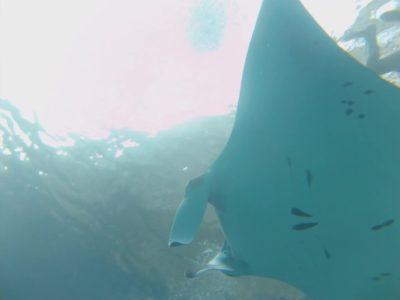 Plonger dans un aquarium grandeur nature avec les raies mantas à Nusa Lembongan