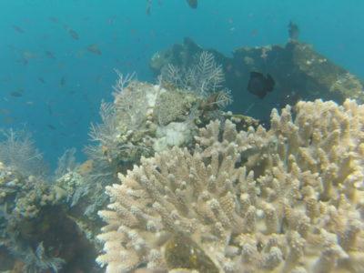 Snorkeling à l'épave de l'USS Liberty de Tulamben
