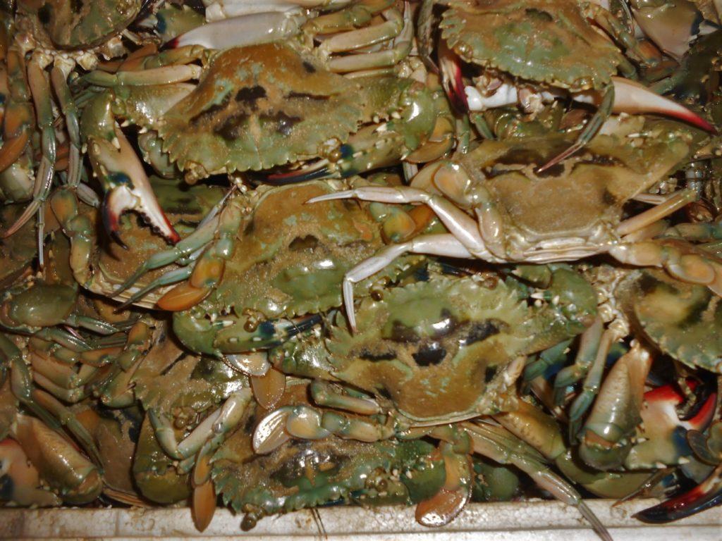 crabes au fisk market (marché au poissons) de Kua Bali