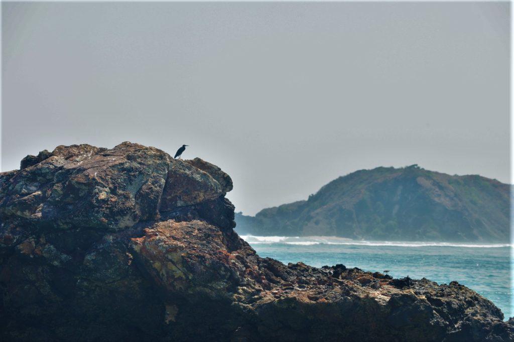 oiseau sur un rocher sur la plage où ramasser les coquillages entre Kuta Lombok et Tanjung Aan Beach
