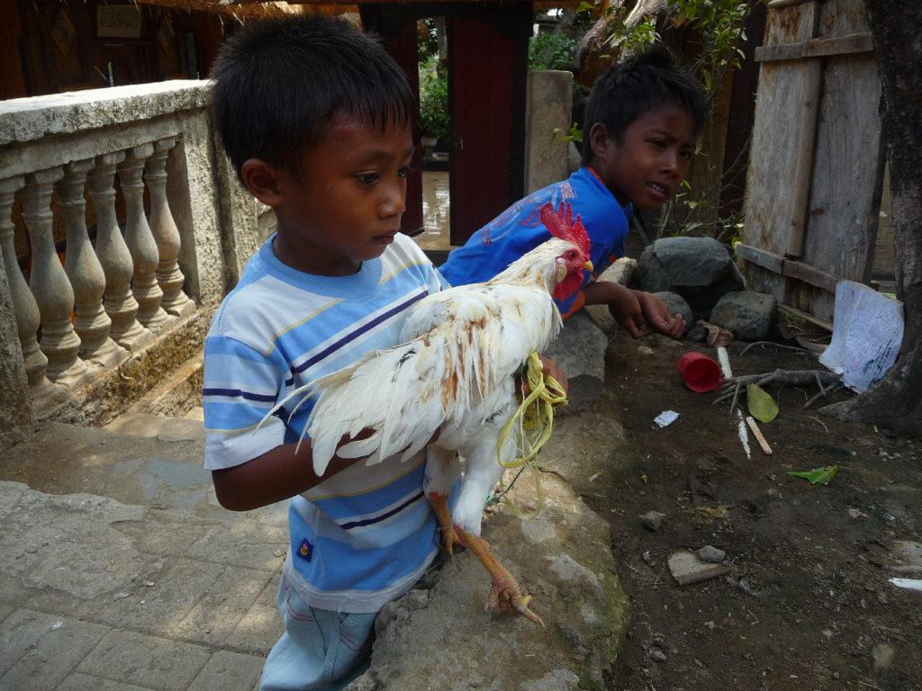 Sade, village sasak à Lombok, enfants avec une poule dans les bras