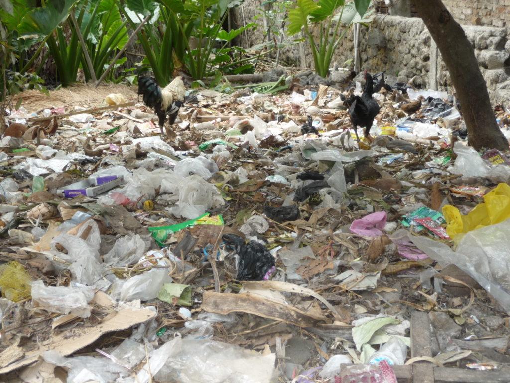 Sade, village sasak à Lombok, poules parmi un tas de déchets