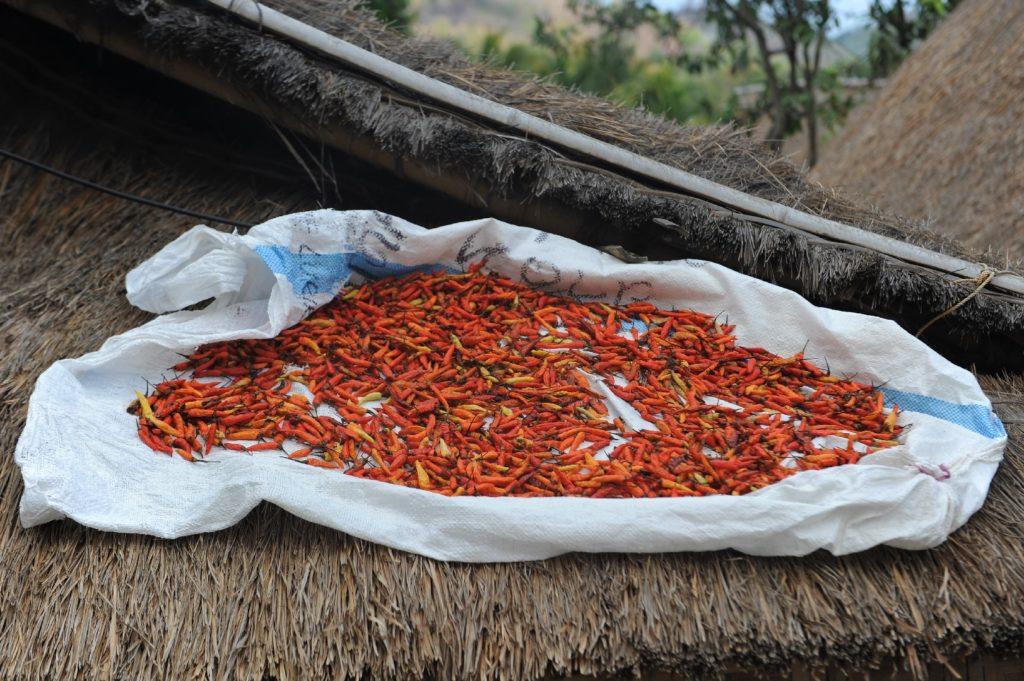 Sade, village sasak à Lombok, piments qui sèchent