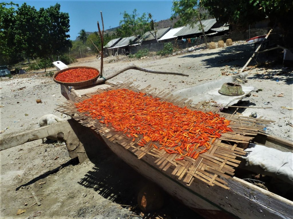 Selong Belanak, plage de rêve de Lombok, au coucher du soleil, piment qui sèche au soleil