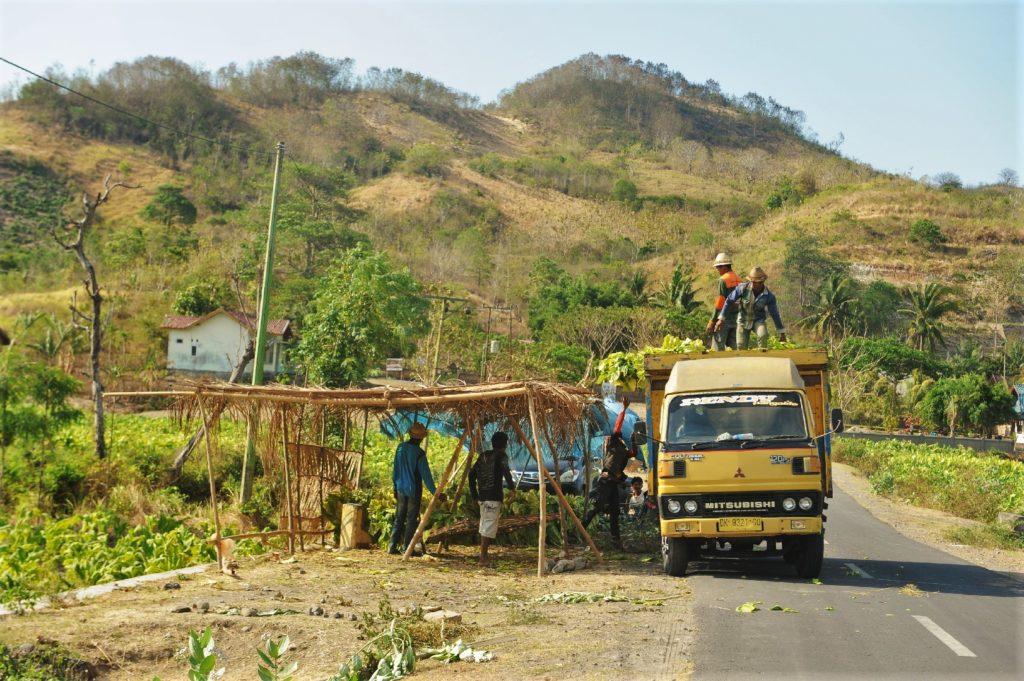 sur la route entre Kuta Lombok et Selong Belanak Beach, chargement d'un camion au bord d'un champs