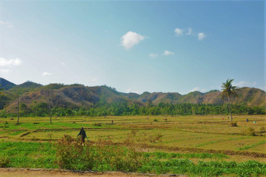 sur la route entre Kuta Lombok et Selong Belanak Beach, paysages de montagnes et plaines cultivées