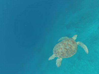 Snorkeling aux îles Gili