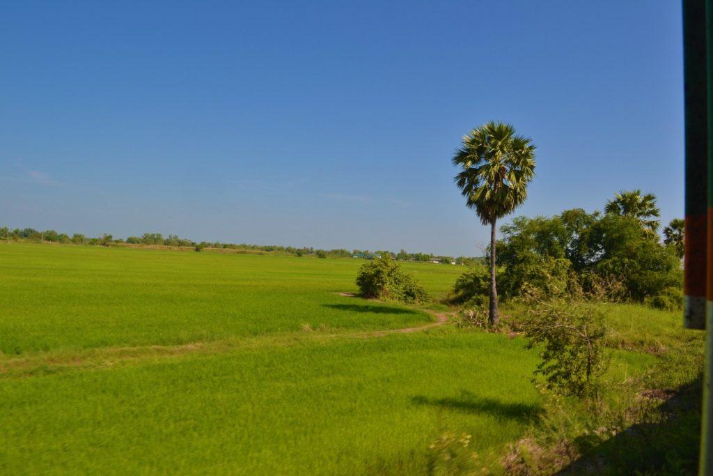paysage de verdure depuis le train entre bangkok à khao yai