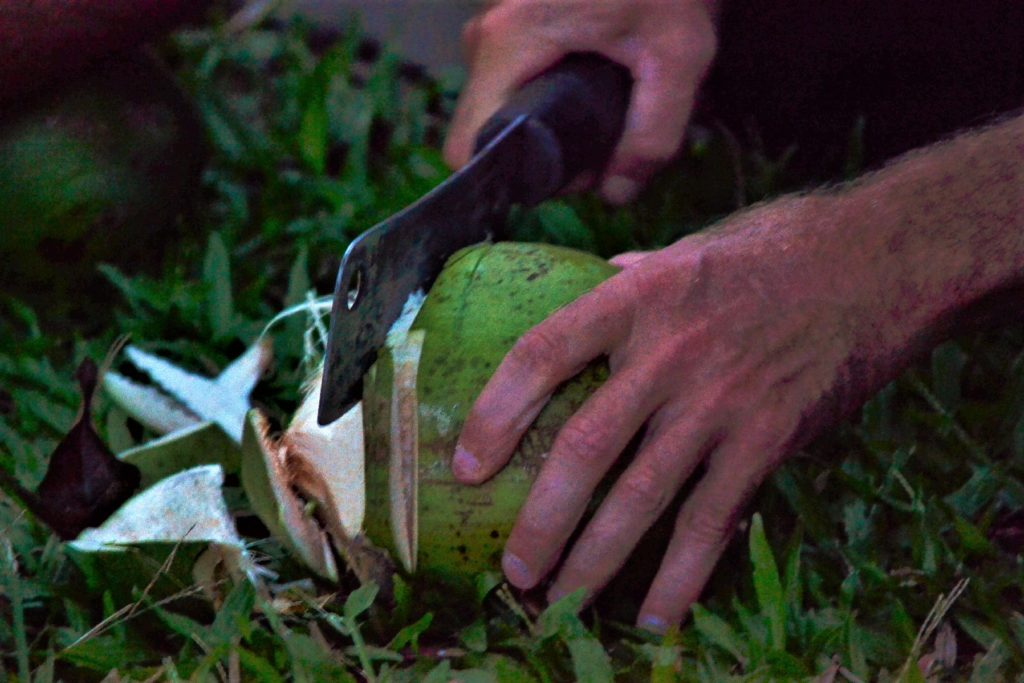 chaton coupe une noix de coco à la machette