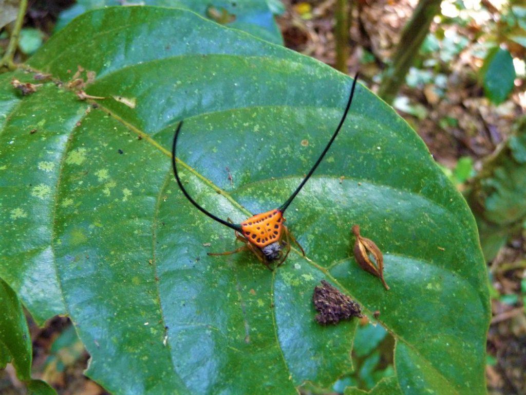 insecte dans la parc national de khao yai