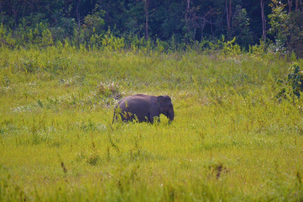 éléphant à kha yai