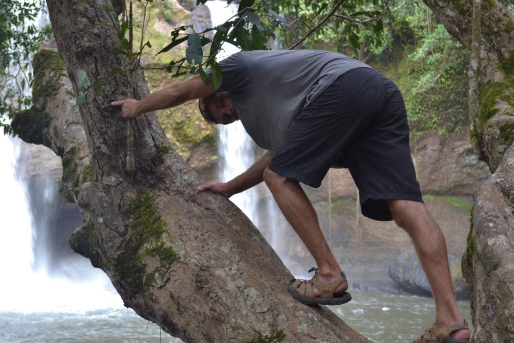 chaton grimpé sur une branche devant la cascade où léonardo di caprio a joué une scène dans le film la plage, parc national de khao yai