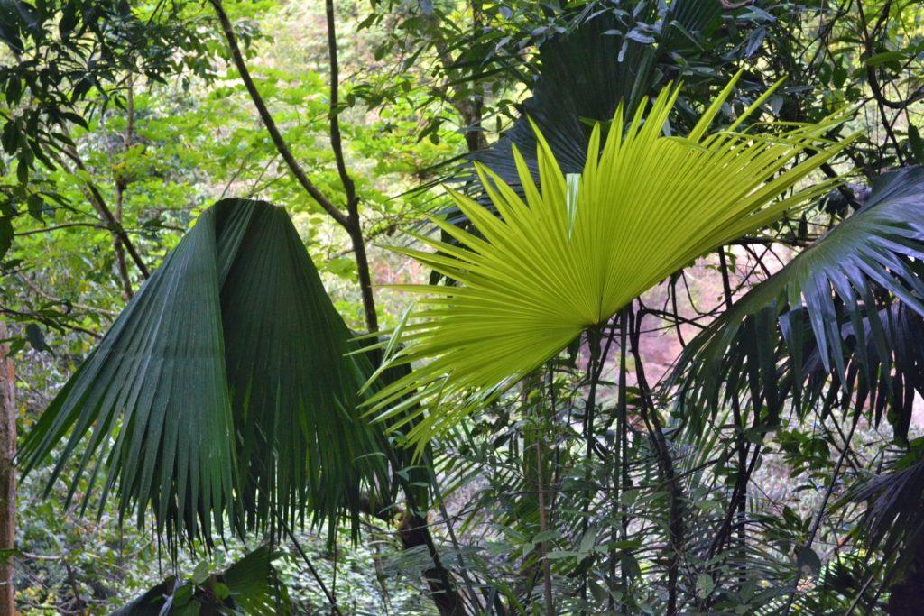 végétation devant la cascade où léonardo di caprio a joué une scène dans le film la plage, parc national de khao yai