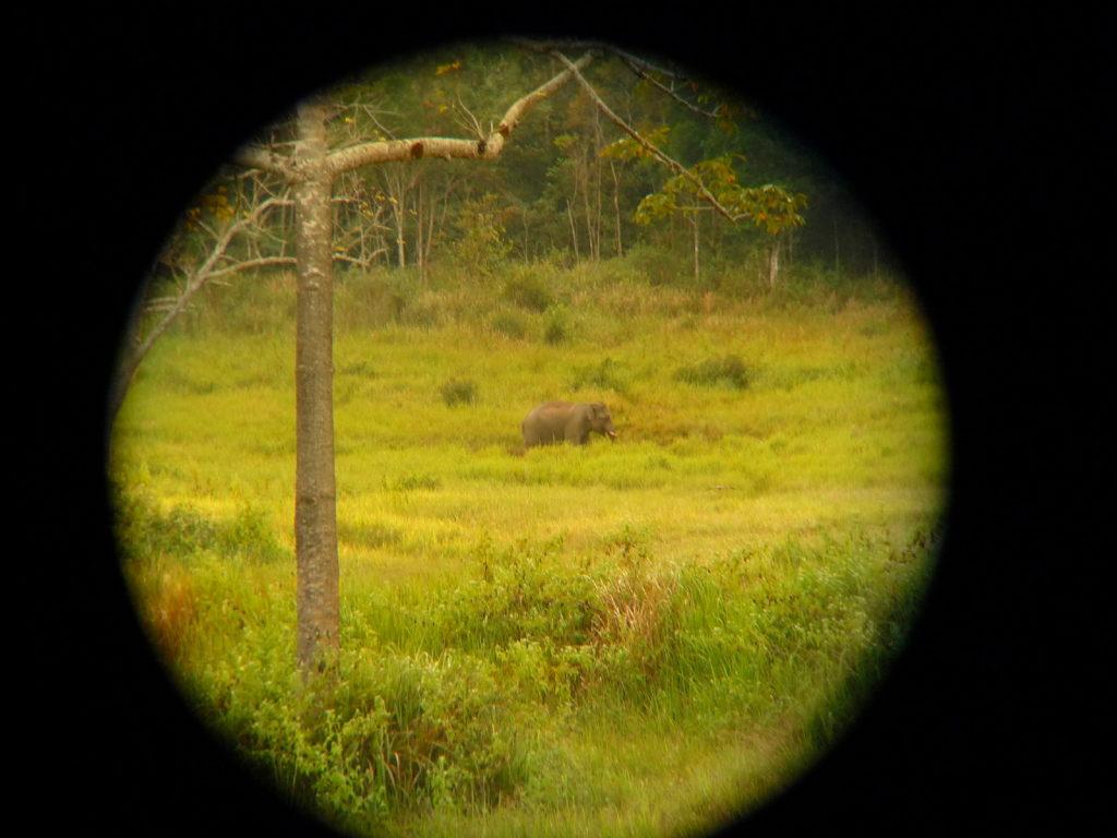 éléphant dans le parc national de khao yai