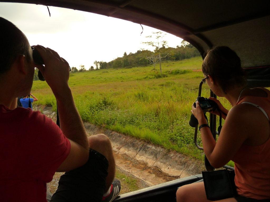 les toots qui observent l'éléphant depuis notre jeep dans le parc national de khao yai