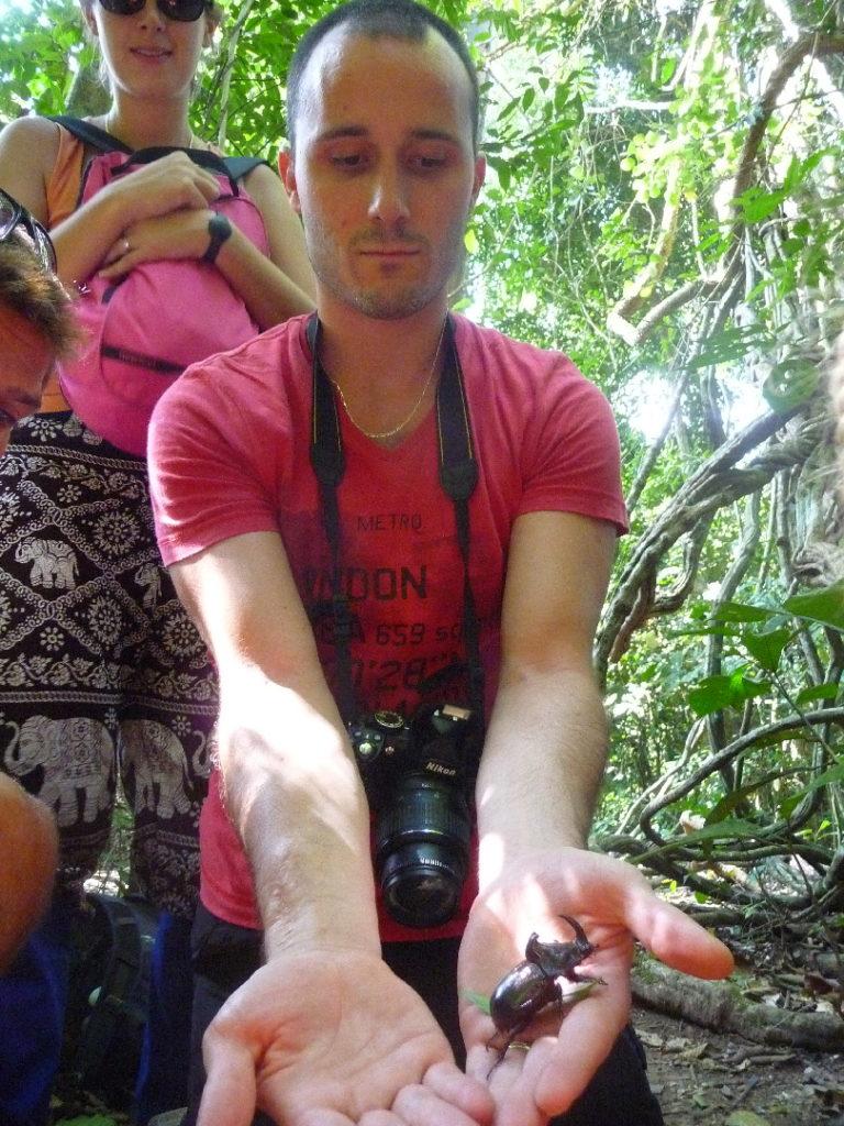 scarabée rhinocéros dans la main de william