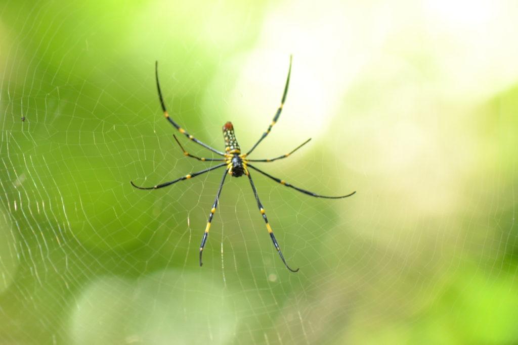 araignée dans le parc national de khao yai