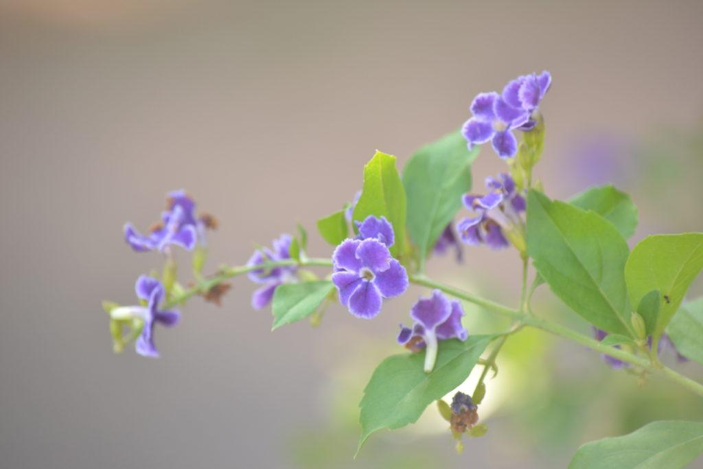 fleur dans le parc national de khao yai