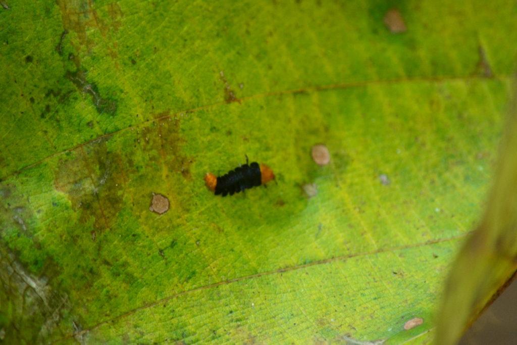 insecte dans le parc national de khao yai