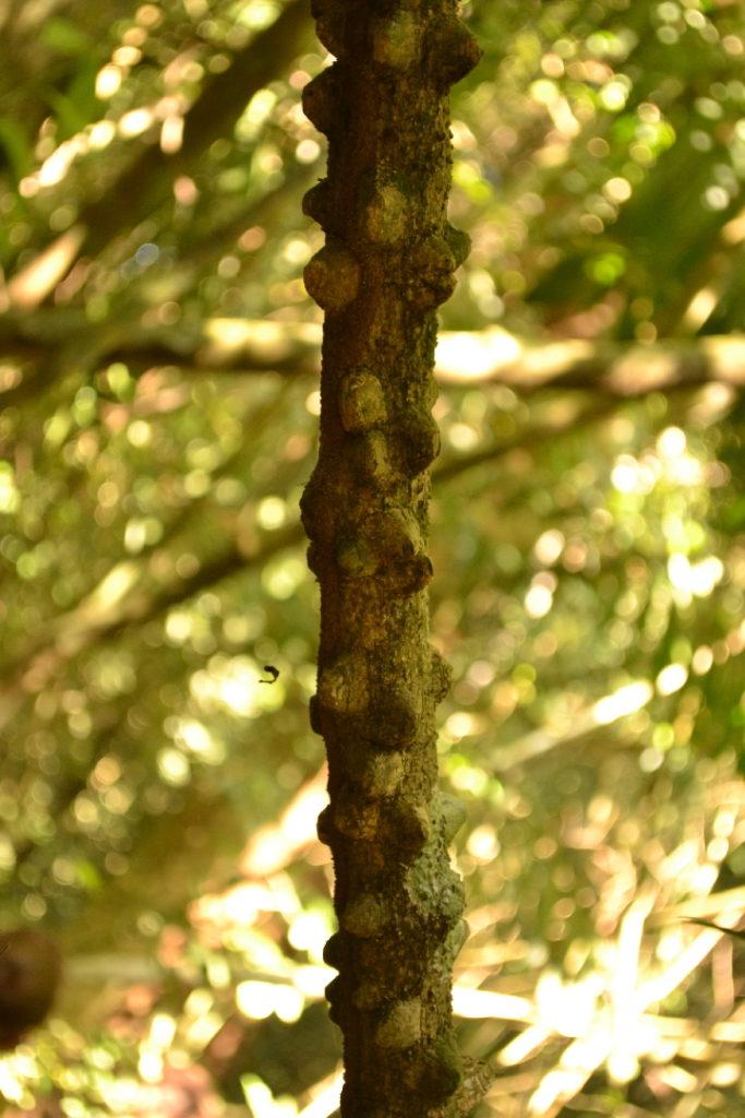 végétation dans le parc national de khao yai
